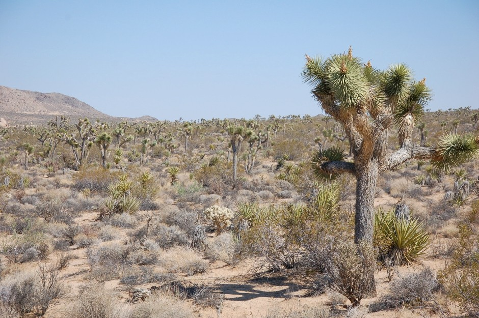 USA, Californie, Joshua Tree